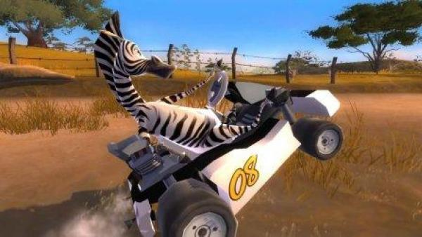 Ein Zebra in wilder Rennfahrerpose.