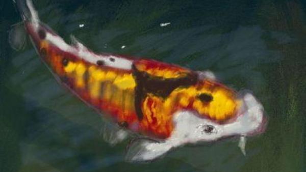 Ein gezeichneter Fisch ist zu sehen.