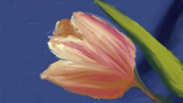 Eine gemalte Tulpe ist zu sehen.