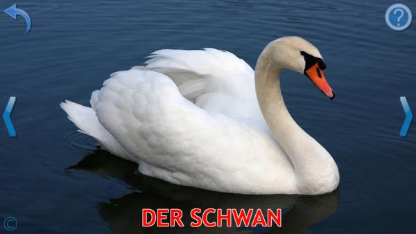 """Screenshot: Foto von einem Schwan Darunter steht """"Der Schwan"""" in Großbuchstaben geschrieben."""
