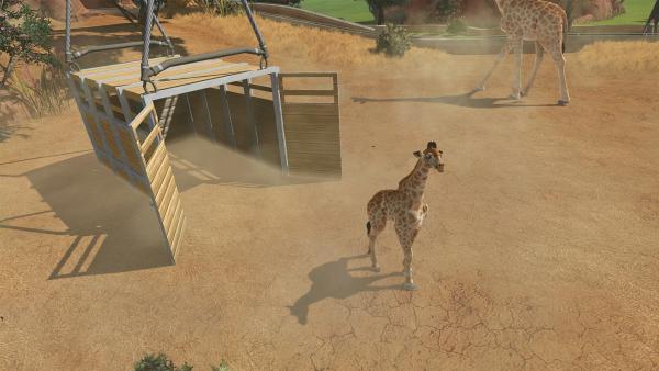 Neues Tier (Giraffe) kommt an