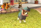 Ein als Nilpferd verkleiderter Hund steht auf einer Wiese.