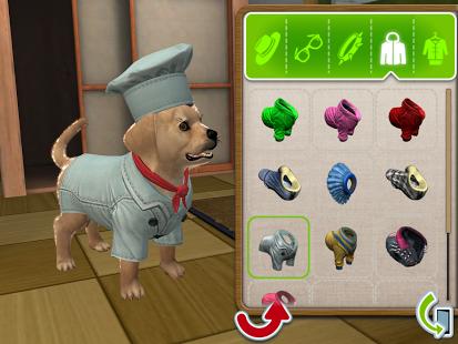 Ein Hund wird eingekleidet.